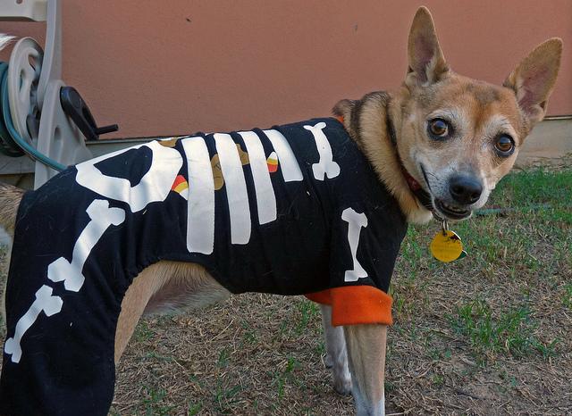 Neko in her Halloween PJs