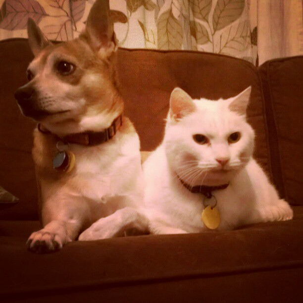 Neko and Suki
